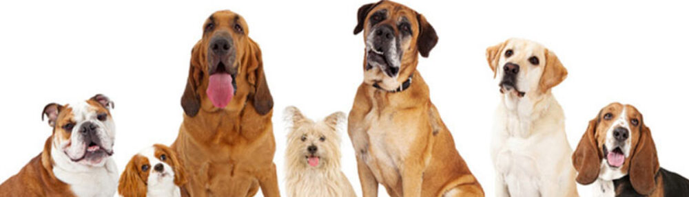 犬と生活豆知識