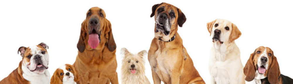 犬と生活豆知識どんどん